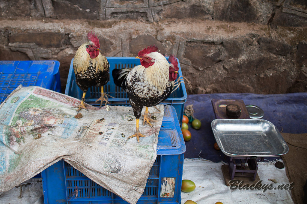 Huhn, ganz frisch